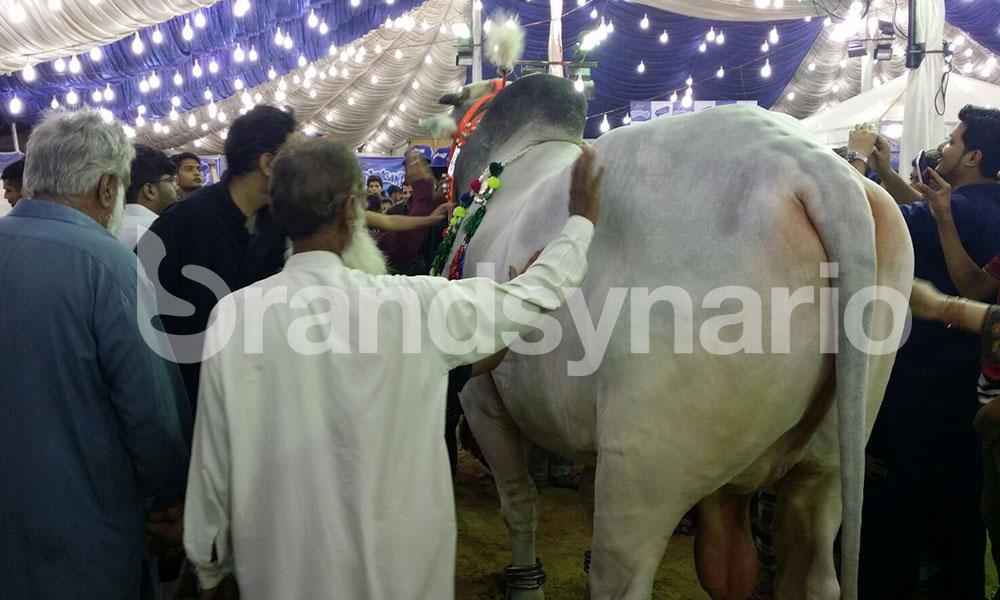 Eid ul Azha 2015