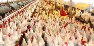 Chicken Meat & Water In Karachi