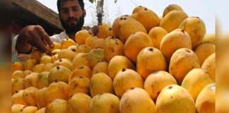 pakistan mangoes
