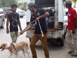 edhi animal shelter
