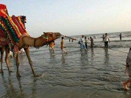camel horse sea view karachi
