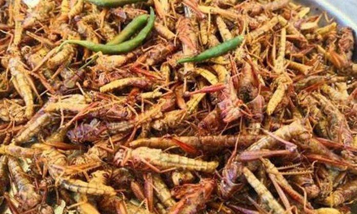 grasshoppers karachi