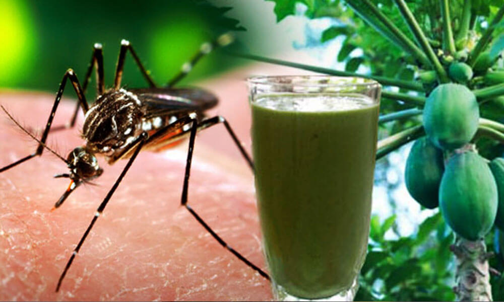 Bar B Q Tonight Refuel Juice Bar Are Offering Free Papaya Leaf Juice To Dengue Patients Brandsynario