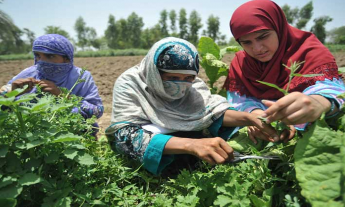 Sindh Assembly Bill for Women in Agriculture