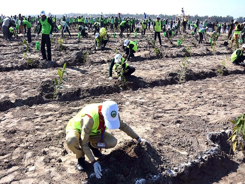 Workers planting trees in KPK