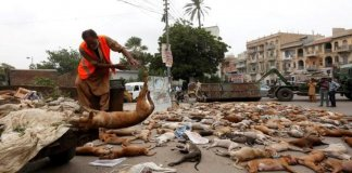 Animal cruelty in Pakistan