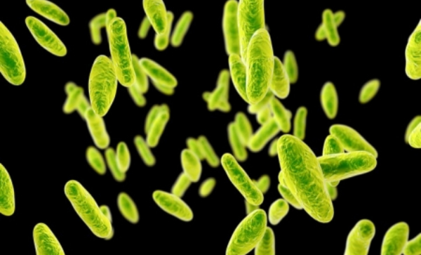 Brucellosis: New Bacteria Outbreak In China That Has Infected Thousands