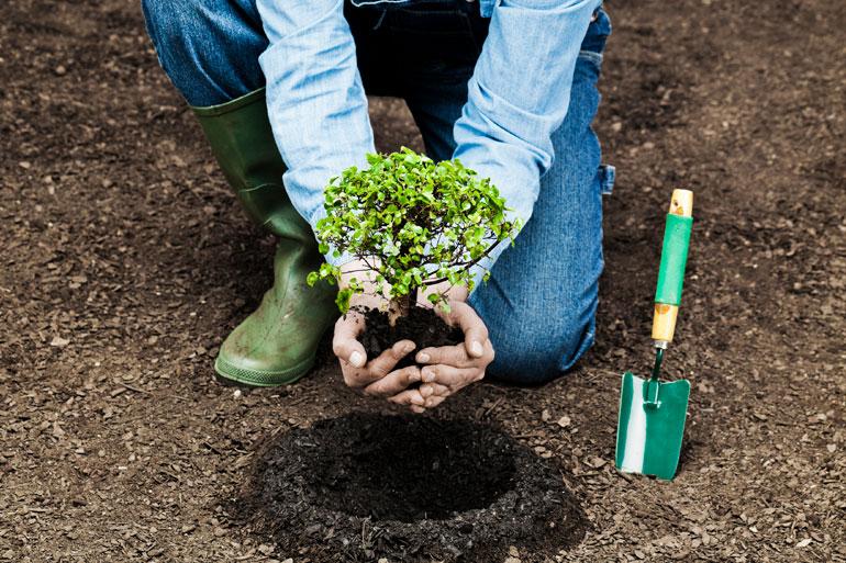 Google's tree plantation new tool