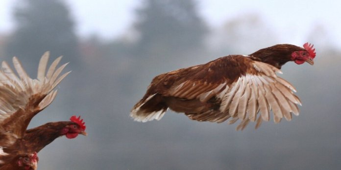 russia human infection bird flu