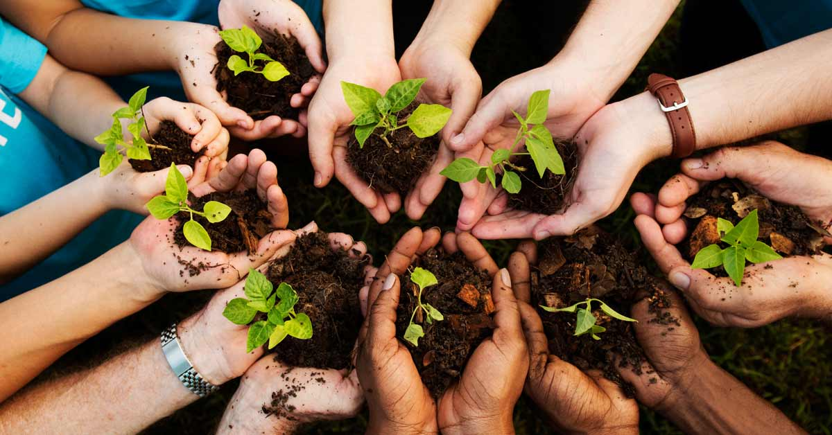 planting trees by university students for marks