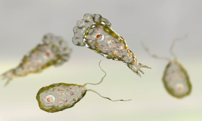 5 Ways To Protect Yourself From The Lethal Naegleria Fowleri