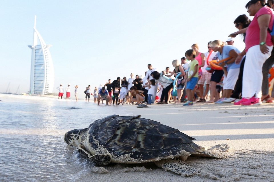 44 turtles released on 44th UAE National Day