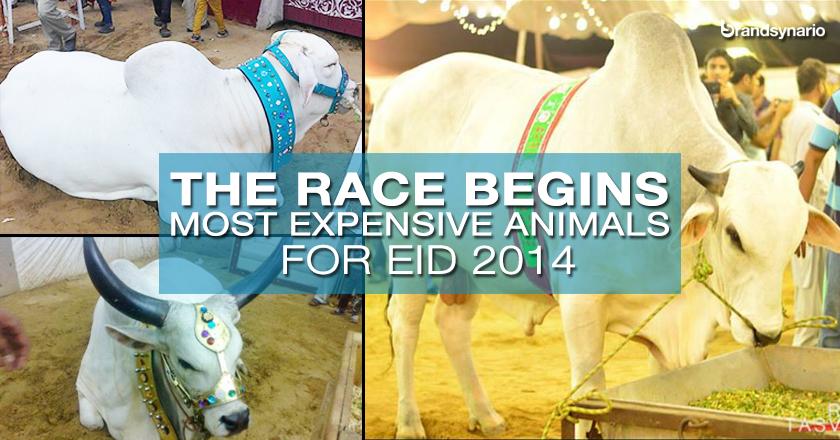 Expensive Animals