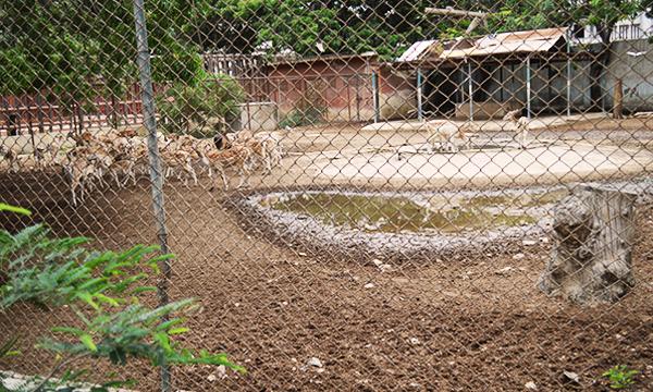 Karachi-Zoo-lead