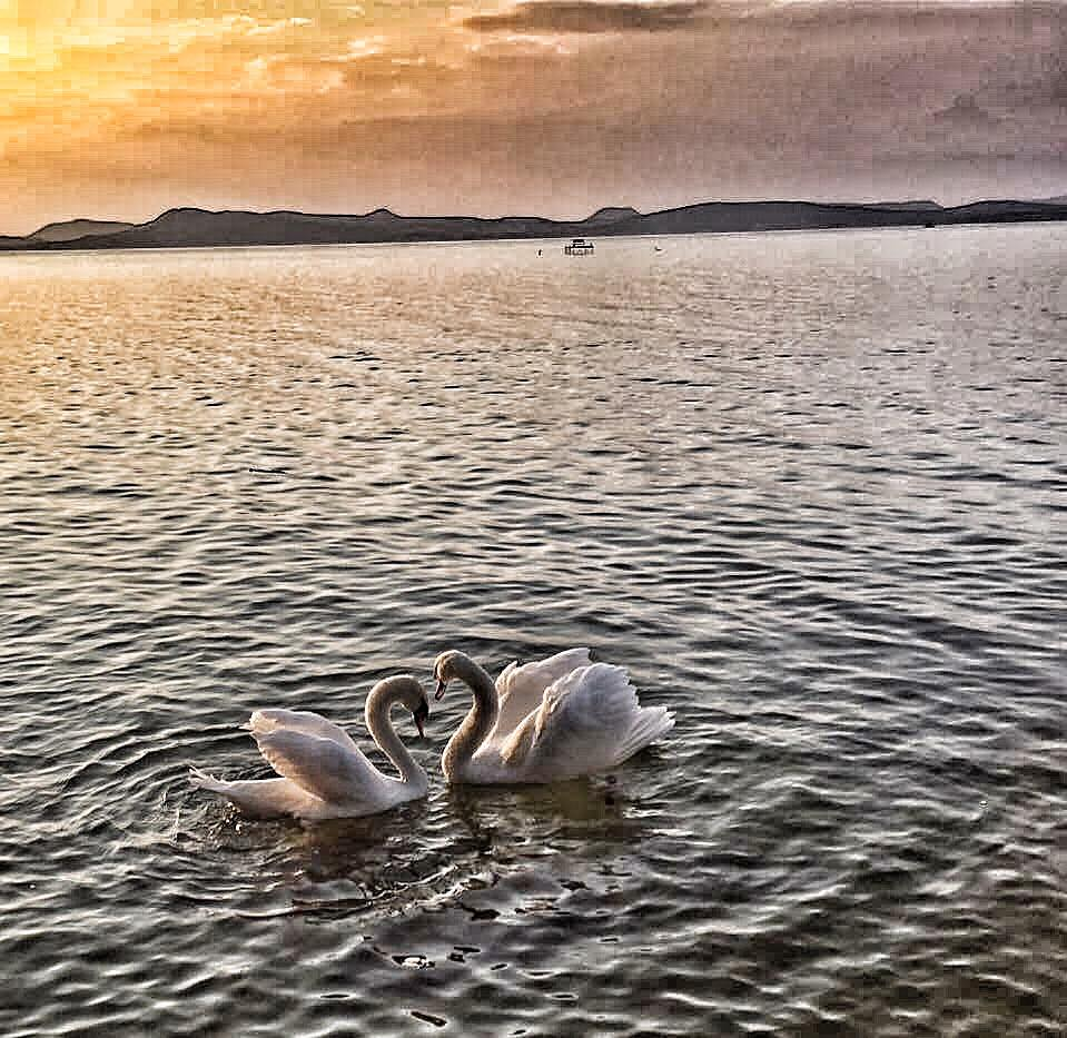love-birds-by-parveen-hassan
