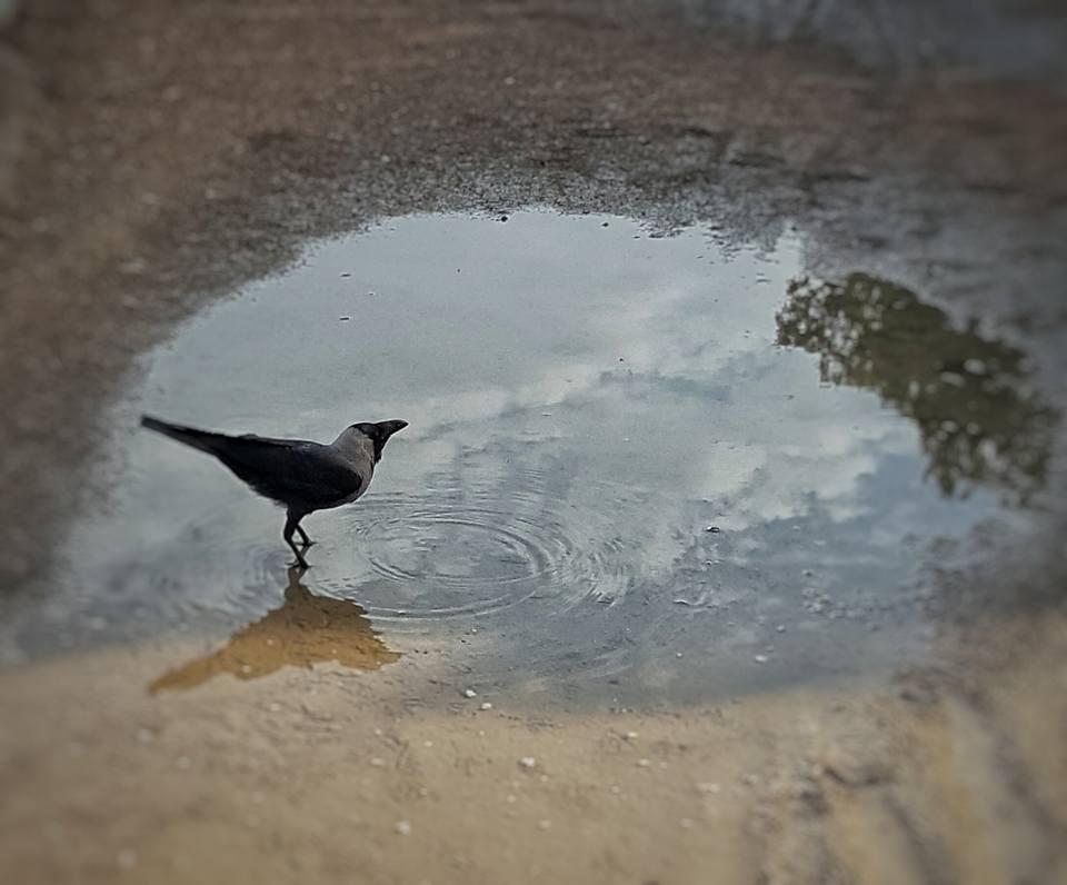 puddled-by-aliya-imran