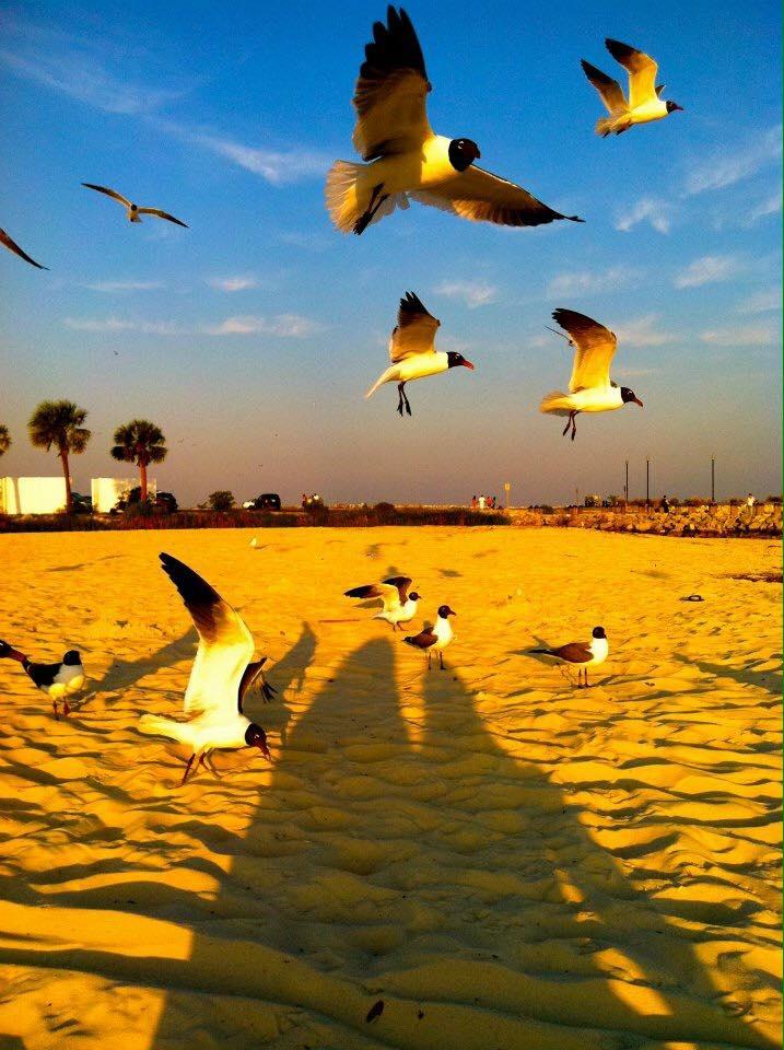 seagulls-in-flight-ainnie-holbrook