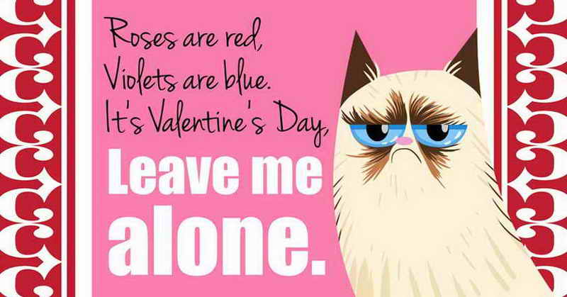 See How Manhoos Billi Wishes Valentines Day