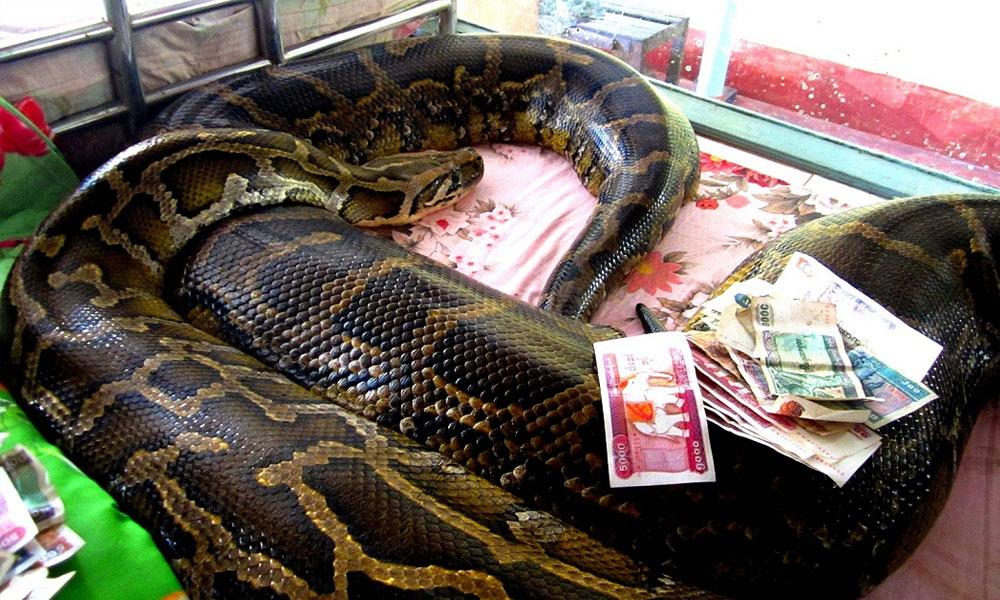 Snake Monastery in Bago