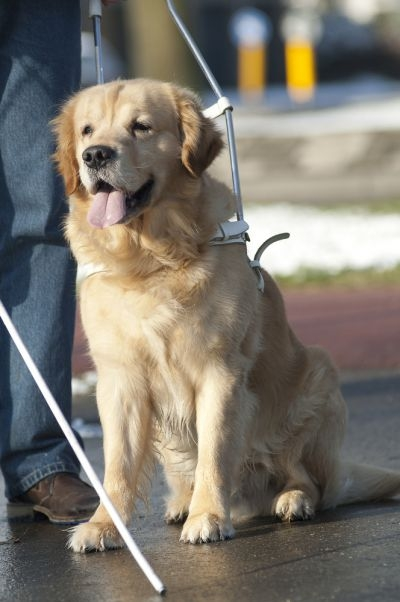 Toyota's project aims to fill in the gaps left by canes, guide dogs and basic GPS systems.