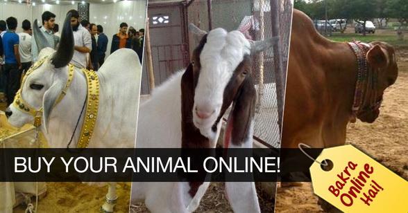 How To Buy Your Bakra/Cow Online for Eid-ul-Azha 2017