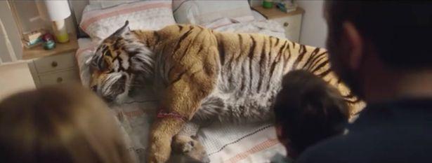 sick-tiger