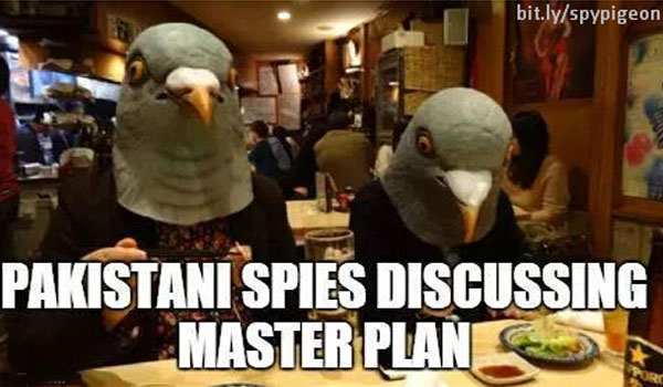 spy-pigeon-8