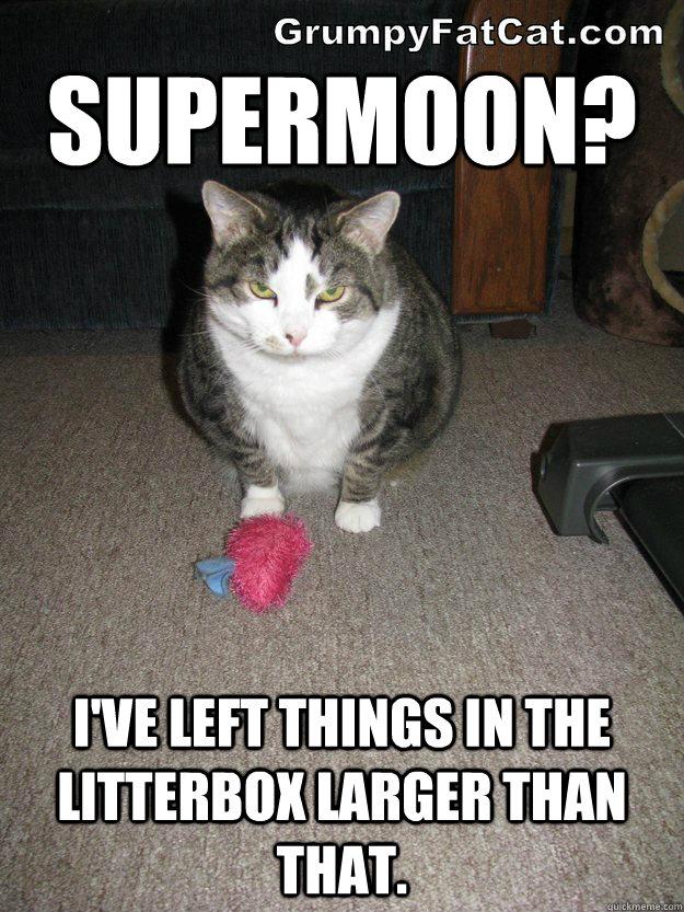 supermoon-cat-meme